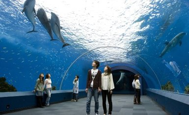 Acuario en Japón