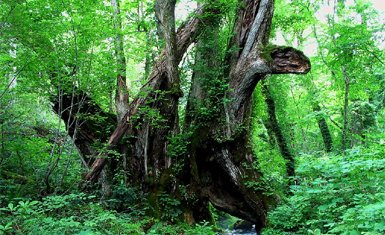 bosque japonés