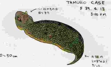 tsuchinoko 2
