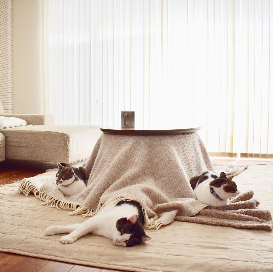 Kotatsu con gatos